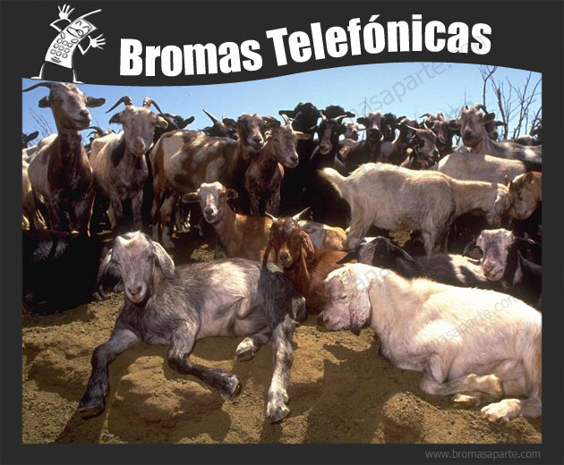 BromasAparte.com - Broma Telefónica 35 cabras