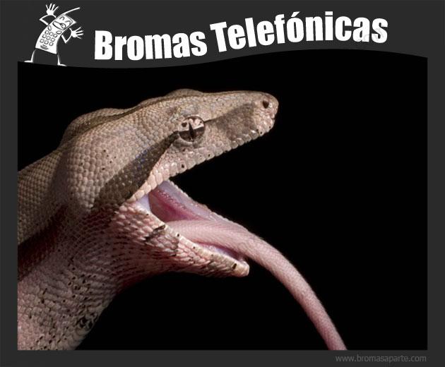 BromasAparte.com - Broma telefónica Boa Constrictor