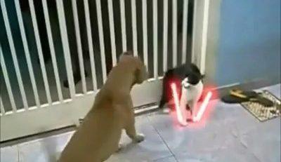 Un gato se escapa de dos perros al estilo Star Wars