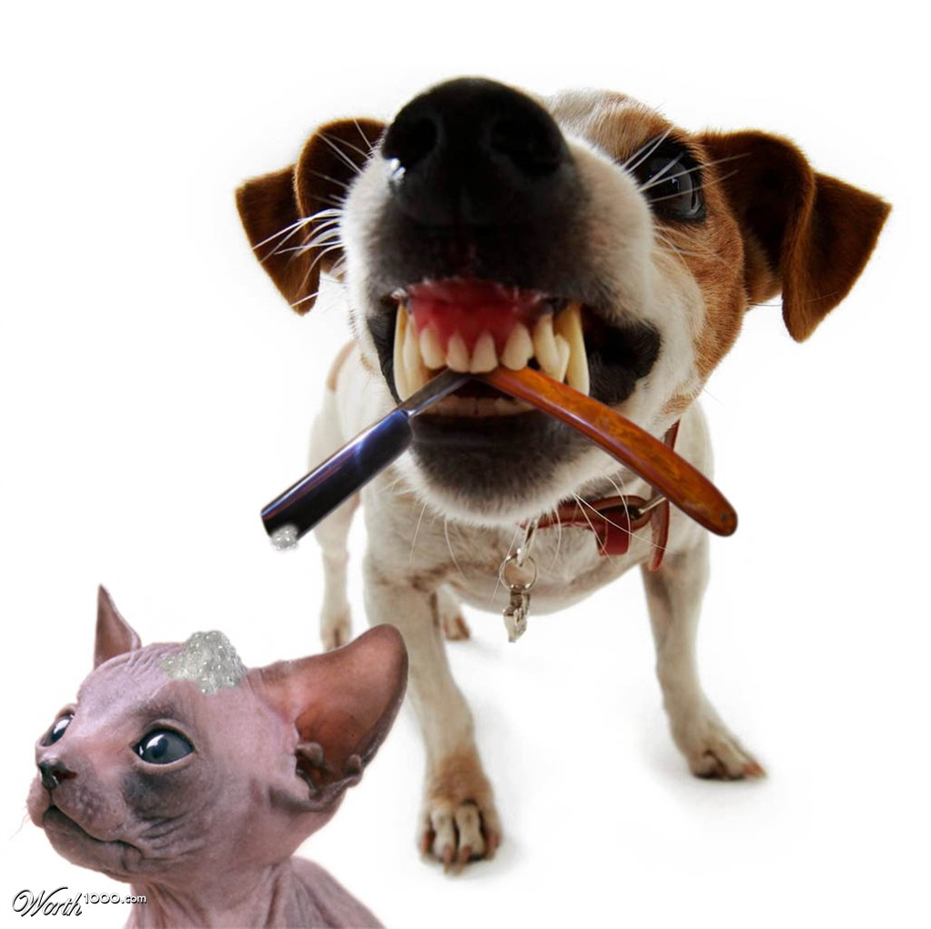 gatos-vs-perros-bromasaparte-0_156