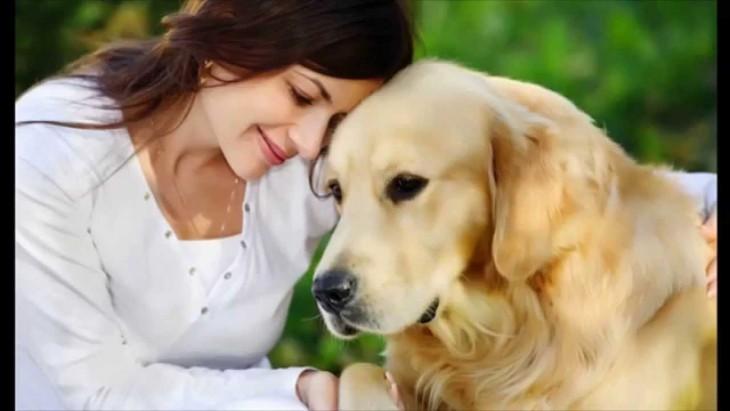 perro golden retriewer que es acariciado por su ama