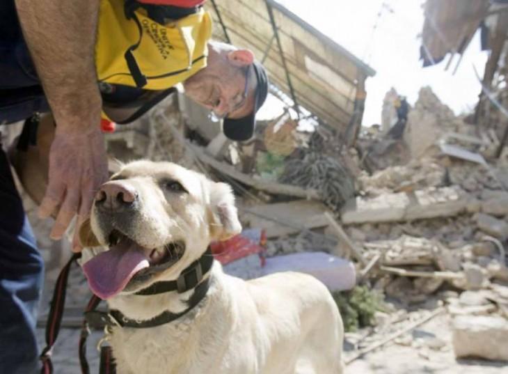 perro blanco entre escombros despues de un derrumbe