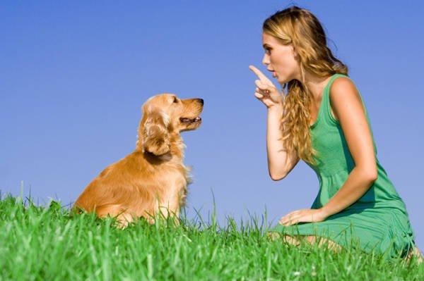random-dog-facts-10