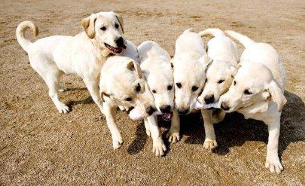 random-dog-facts-7