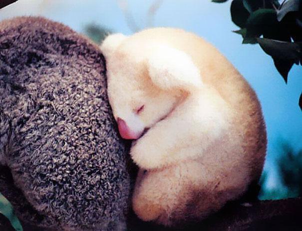 28-fotos-de-animales-en-fase-bebes (11)