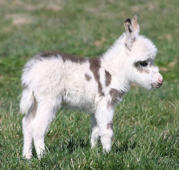 28-fotos-de-animales-en-fase-bebes (15)