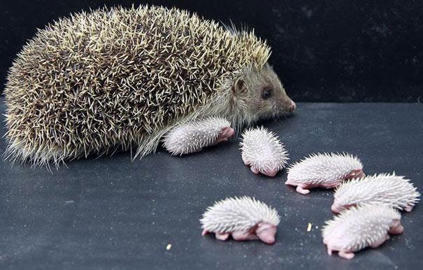 28-fotos-de-animales-en-fase-bebes (18)