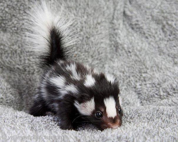 28-fotos-de-animales-en-fase-bebes (24)