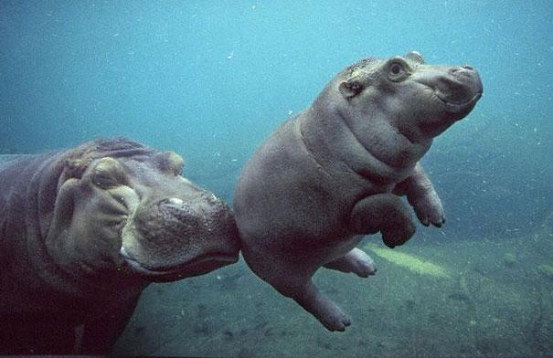 28-fotos-de-animales-en-fase-bebes (25)