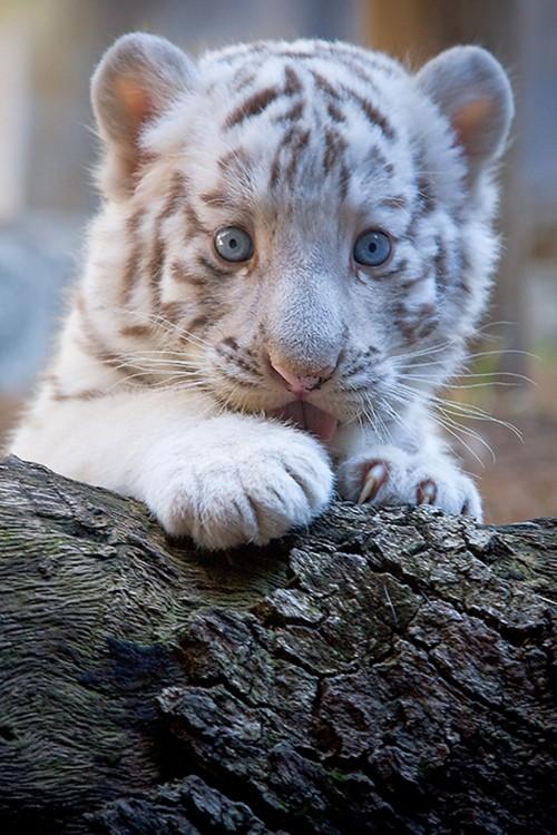 28-fotos-de-animales-en-fase-bebes (28)