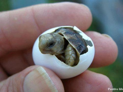 28-fotos-de-animales-en-fase-bebes (30)