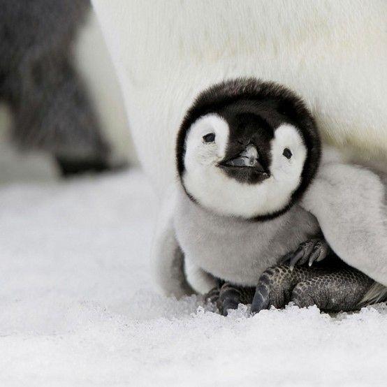 28-fotos-de-animales-en-fase-bebes (32)