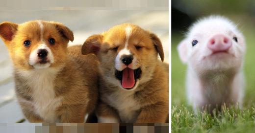 28-fotos-de-animales-en-fase-bebes (6)