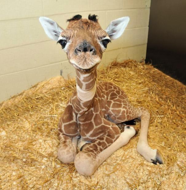 28-fotos-de-animales-en-fase-bebes (7)
