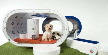 fotos-casas-para-perros-originales (12)