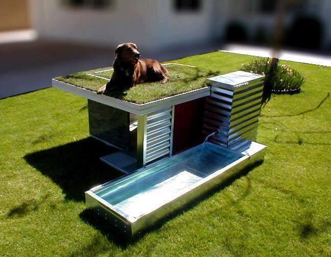 fotos-casas-para-perros-originales (3)
