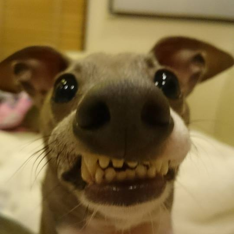 perros-graciosos-13