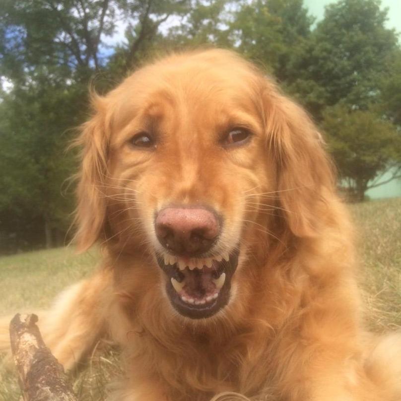 perros-graciosos-14