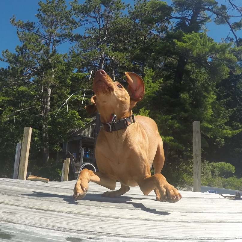 perros-graciosos-15