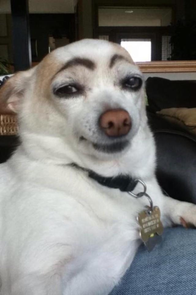 perros-graciosos-20