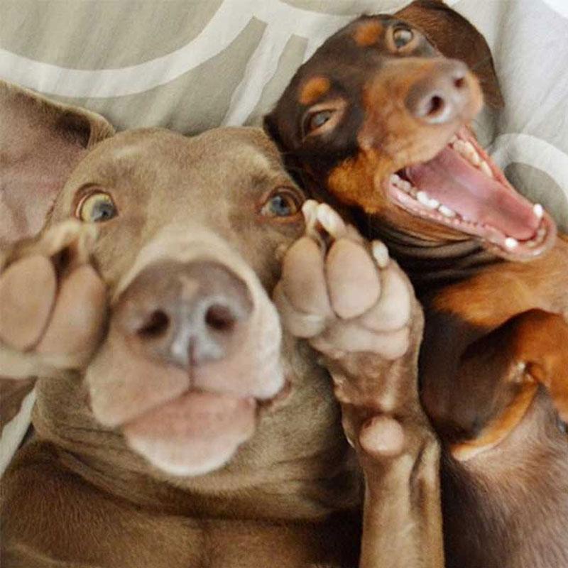 perros-graciosos-24