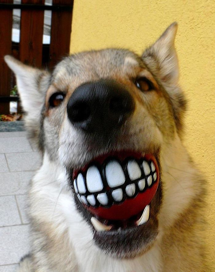 perros-graciosos-4