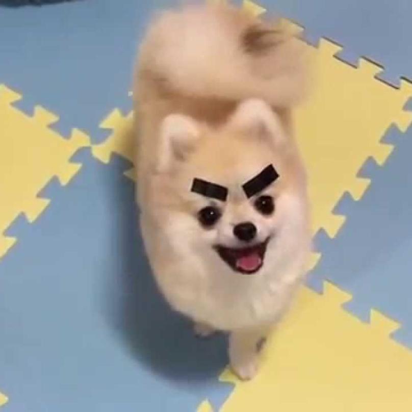 perros-graciosos-5