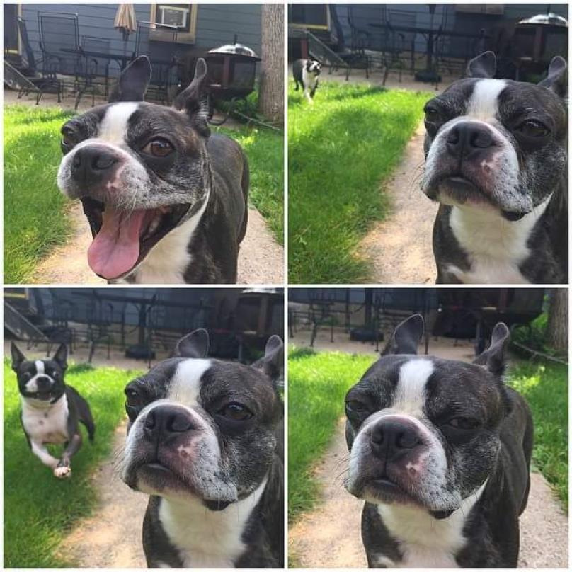 perros-graciosos-7