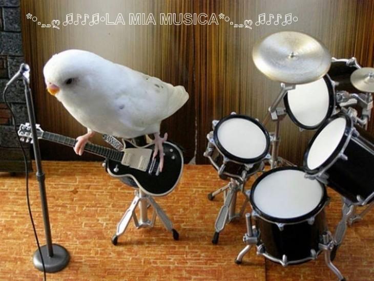 animales-imitando-humanos-9