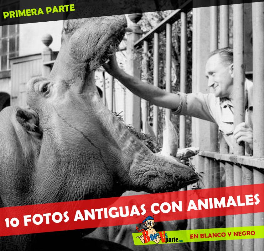 fotos-antiguas-con-animales