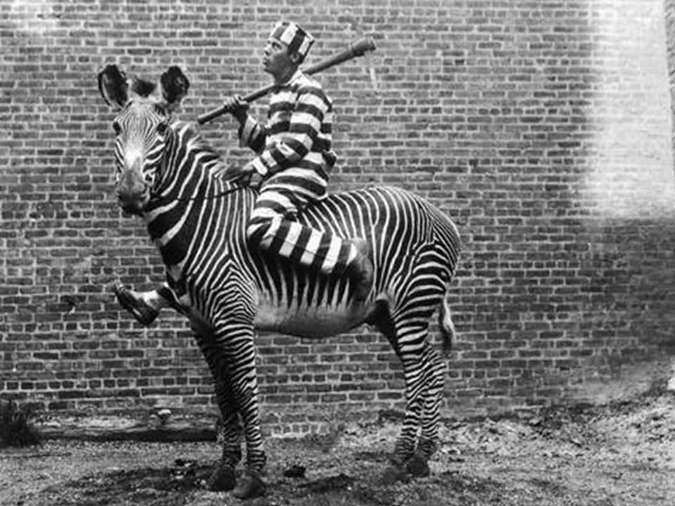fotos-antiguas-con-animales-11