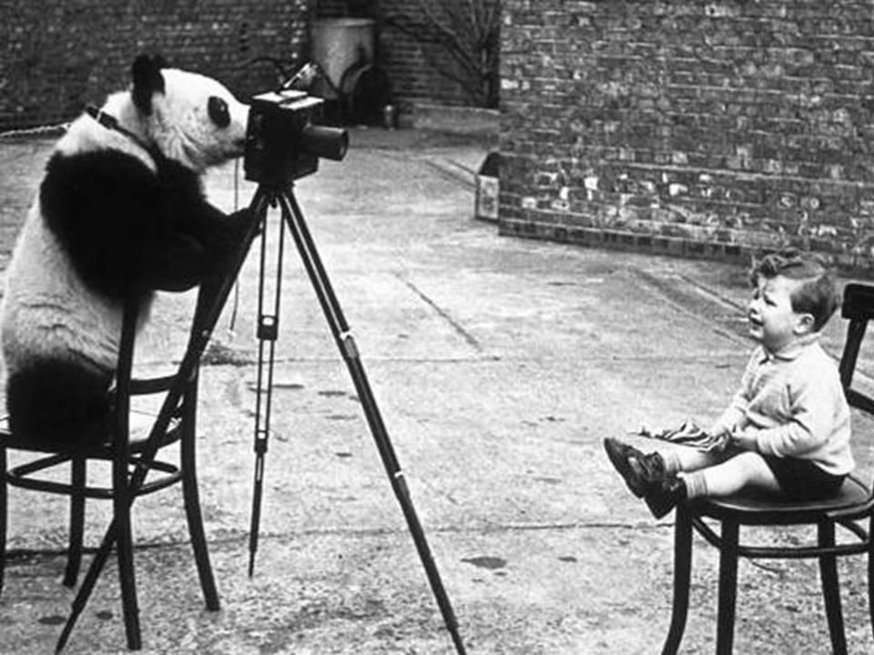 fotos-antiguas-con-animales-25