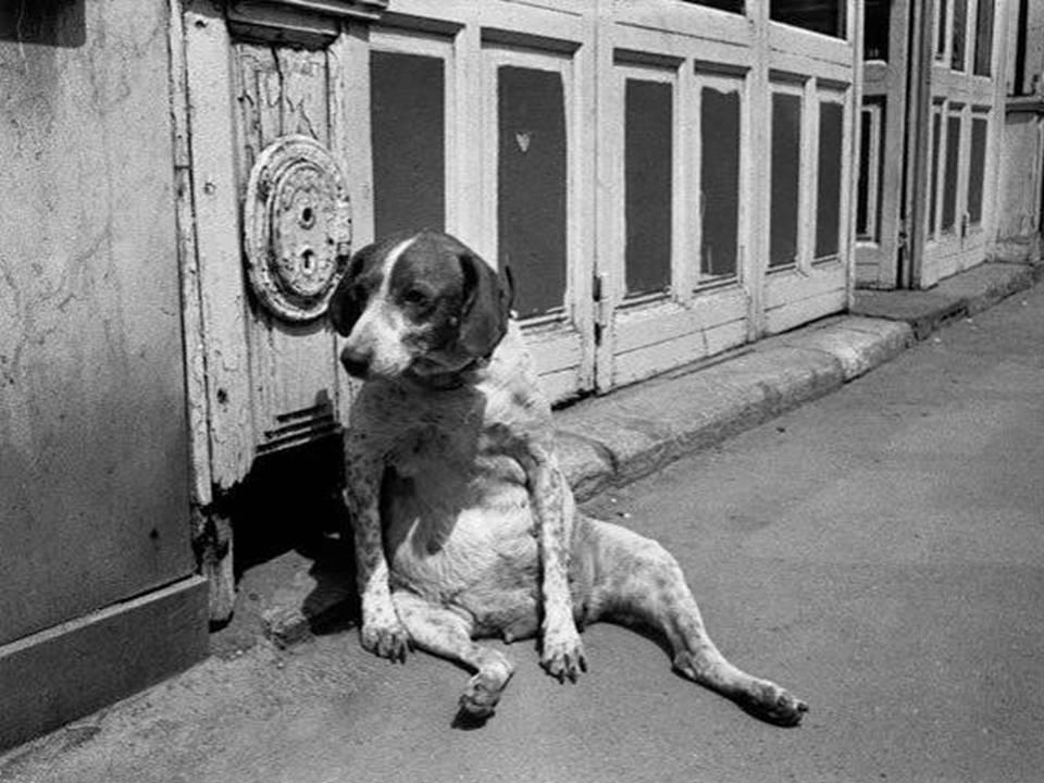 fotos-antiguas-con-animales-26