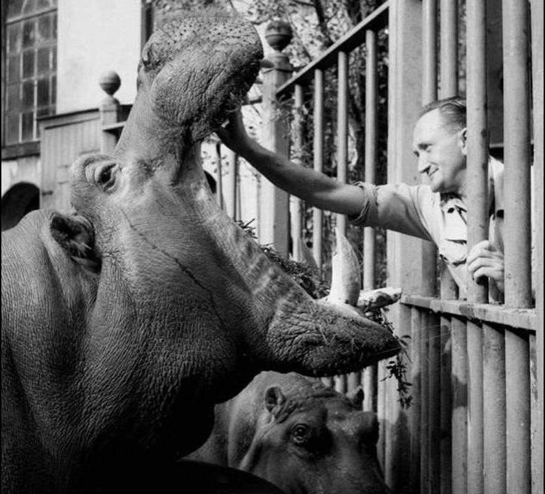 fotos-antiguas-con-animales-5
