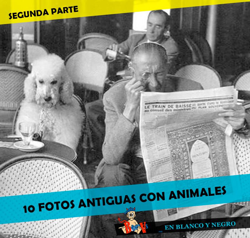 fotos-antiguas-con-animales2