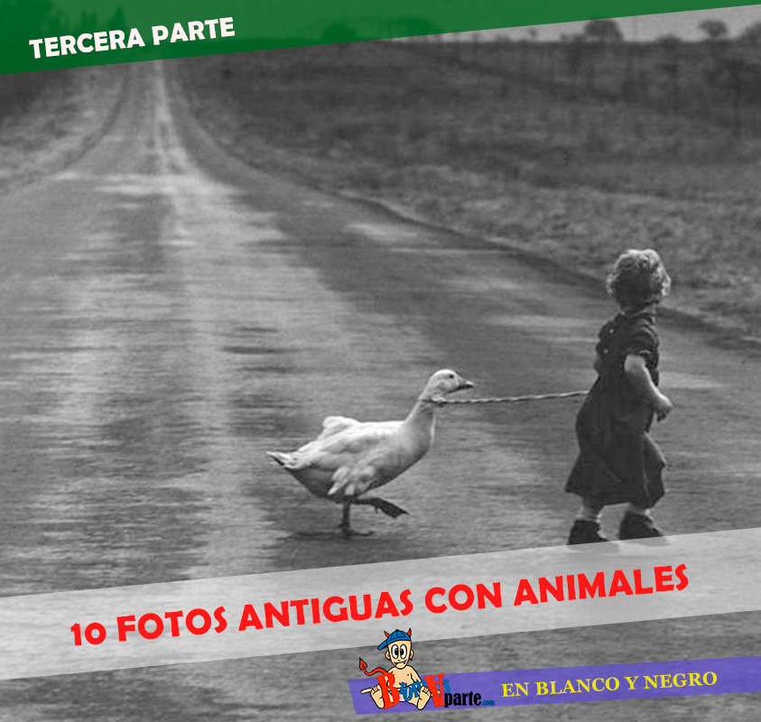 fotos-antiguas-con-animales3