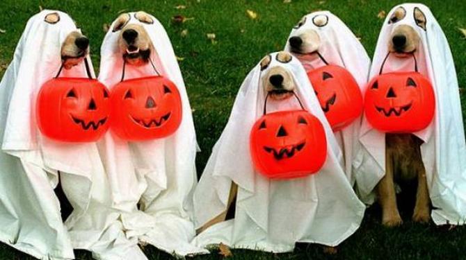 mejores-disfraces-para-animales-halloween-1