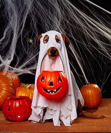 mejores-disfraces-para-animales-halloween-11