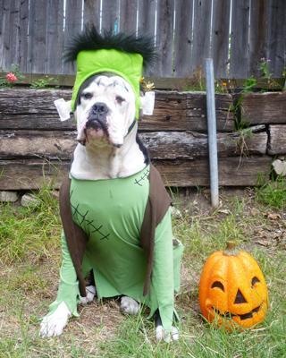 mejores-disfraces-para-animales-halloween-12