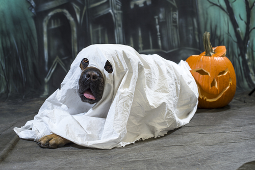 mejores-disfraces-para-animales-halloween-13