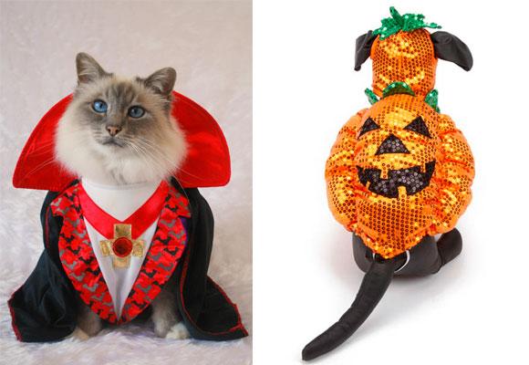 mejores-disfraces-para-animales-halloween-16