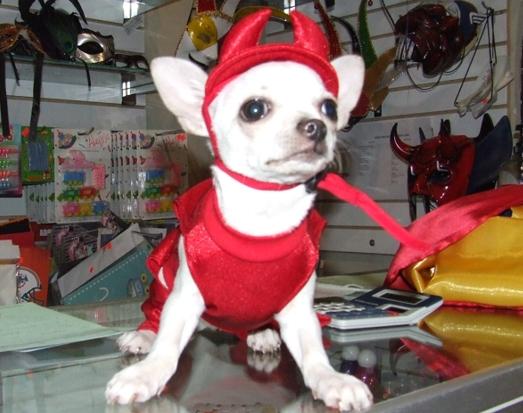 mejores-disfraces-para-animales-halloween-17