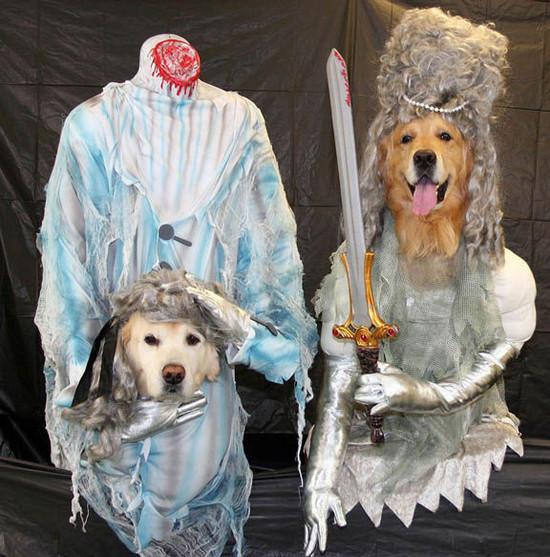 mejores-disfraces-para-animales-halloween-18