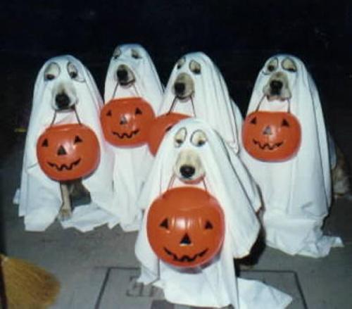 mejores-disfraces-para-animales-halloween-19