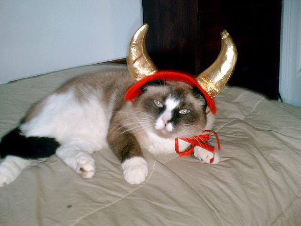mejores-disfraces-para-animales-halloween (21).jpg