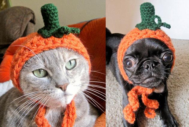 mejores-disfraces-para-animales-halloween-23