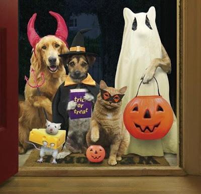 mejores-disfraces-para-animales-halloween-25