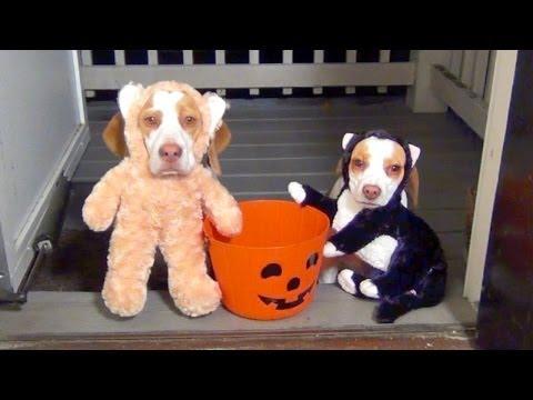 mejores-disfraces-para-animales-halloween-26