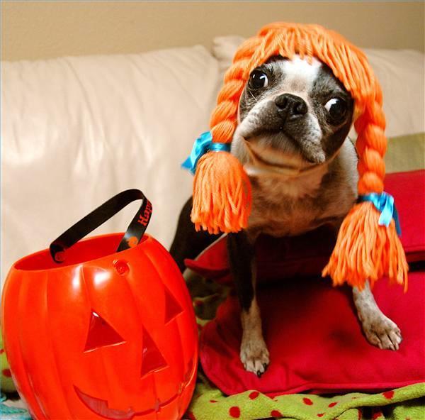 mejores-disfraces-para-animales-halloween-28