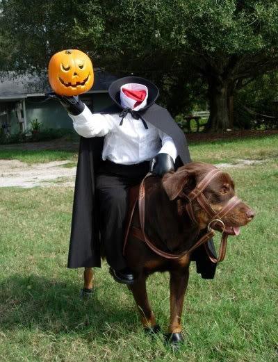 mejores-disfraces-para-animales-halloween-29